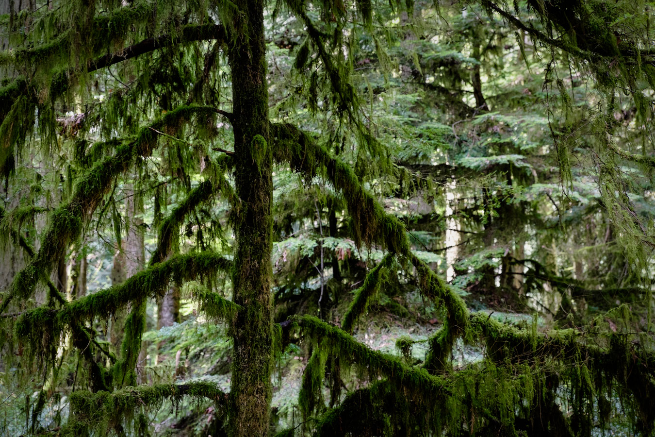 British Columbia, Canada, forest by Sharon Blance photographer